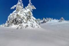 Neve-Intonsa